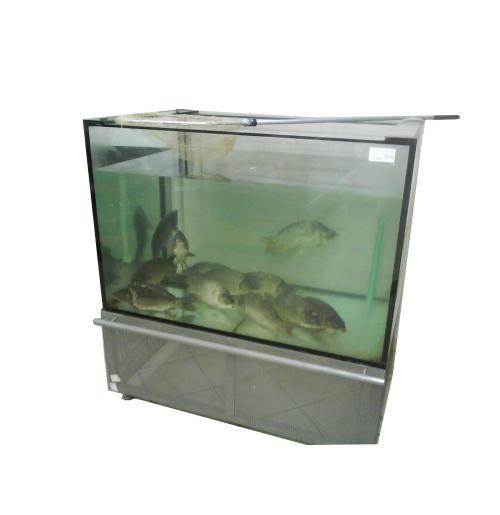 Промышленный аквариум для продажи рыбы 250 литров